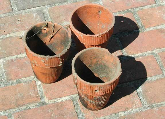 Clay pots for collection of turpentine