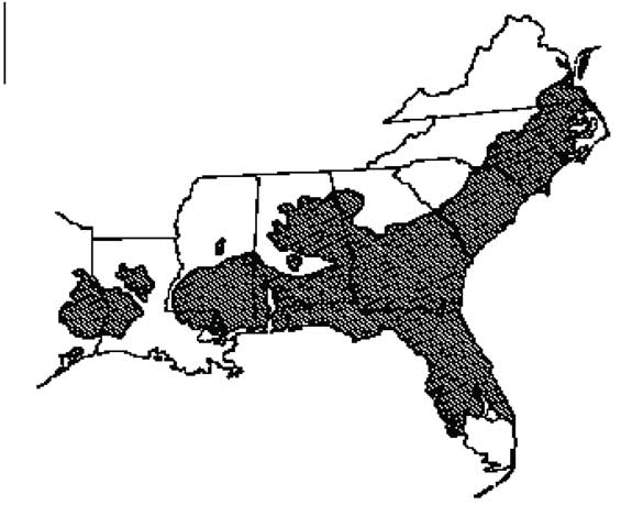 Current range of the longleaf